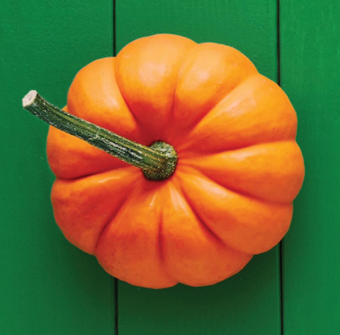 Pumpkin_only