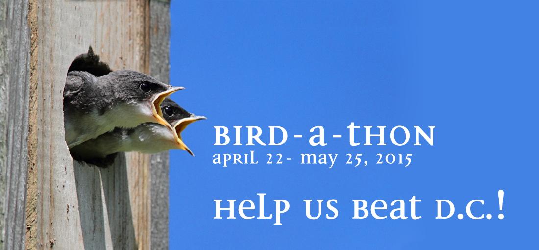 BirdAThon_Home2
