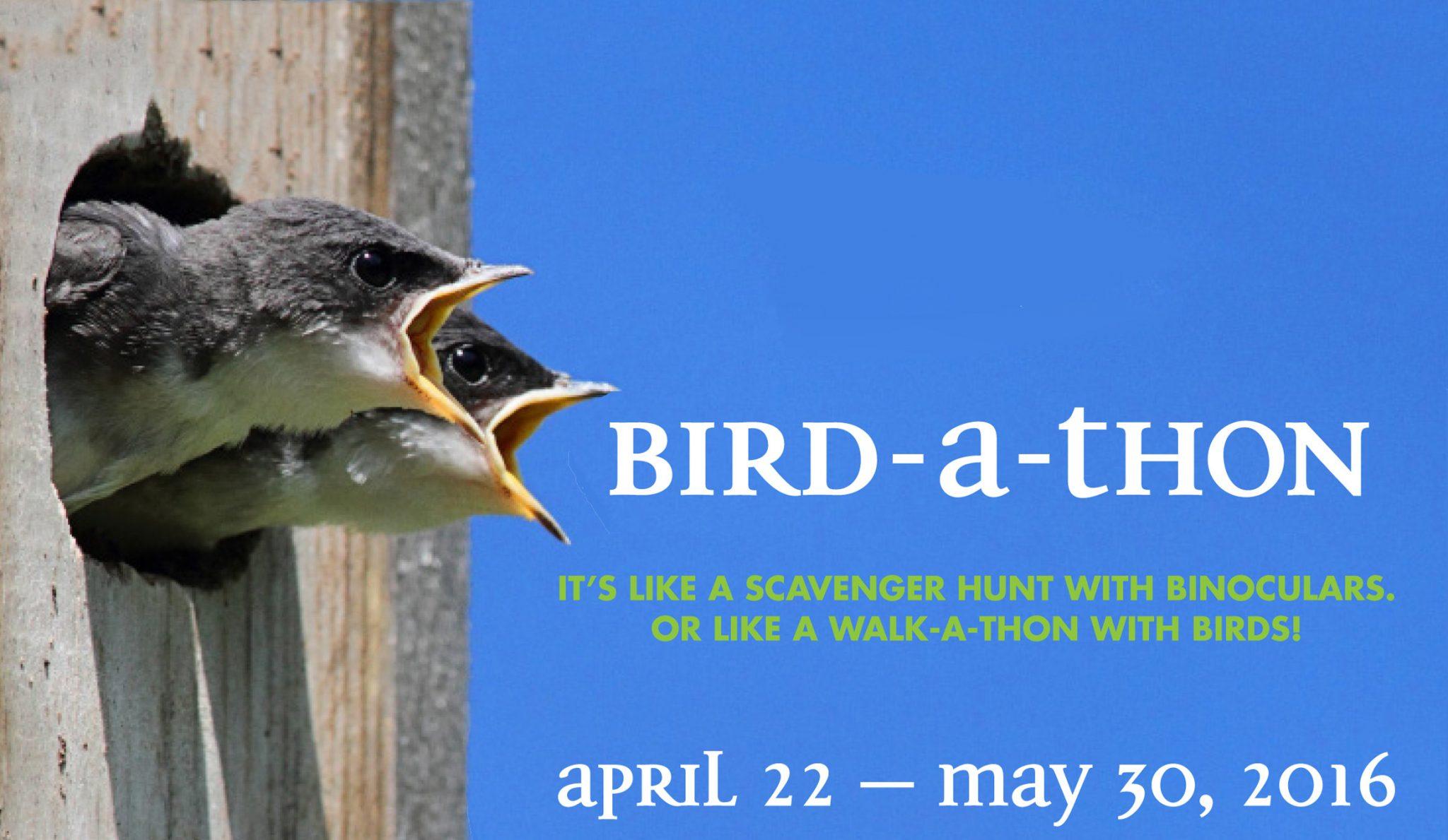 Birdathon_web