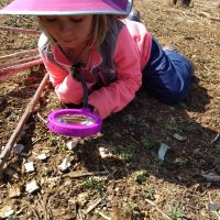 Forest Explorers Wed